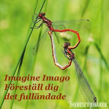 Imagine Imago 3