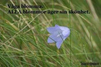 Våga blomma liten