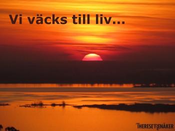 Vi väcks till liv av solen