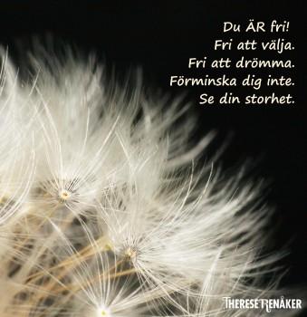 Dröm fritt